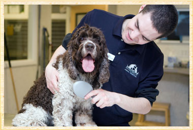 Dog Grooming Rhinebeck NY, Dog Groomer, Pet Boarding NY