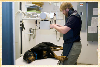 Radiology Services at Rhinebeck Animal Hospital, Pet Vet and Veterinary Hospital in NY