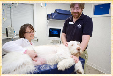 Ultrasound services at Rhinebeck Animal Hospital, Veterinarian in Upstate NY